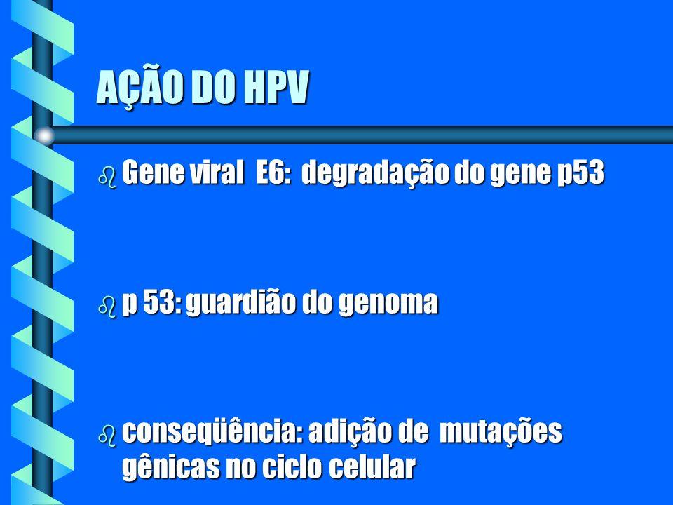 AÇÃO DO HPV Gene viral E6: degradação do gene p53