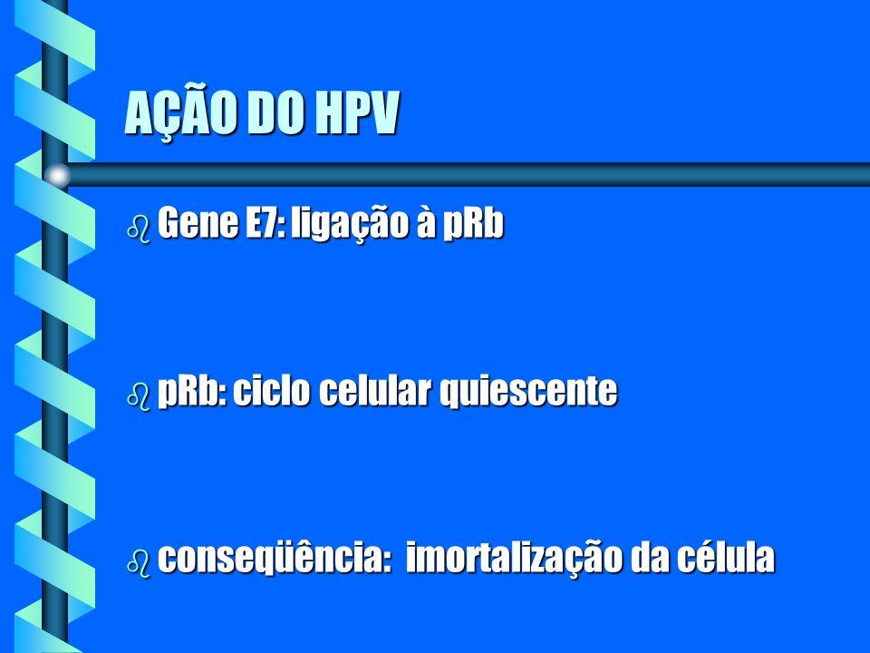 AÇÃO DO HPV Gene E7: ligação à pRb pRb: ciclo celular quiescente