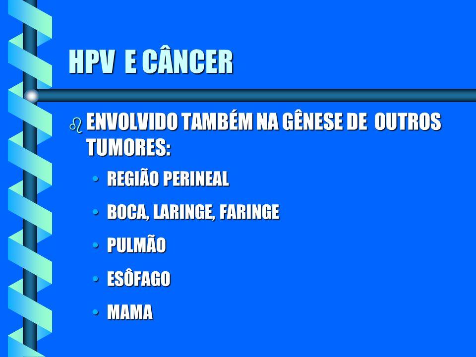 HPV E CÂNCER ENVOLVIDO TAMBÉM NA GÊNESE DE OUTROS TUMORES: