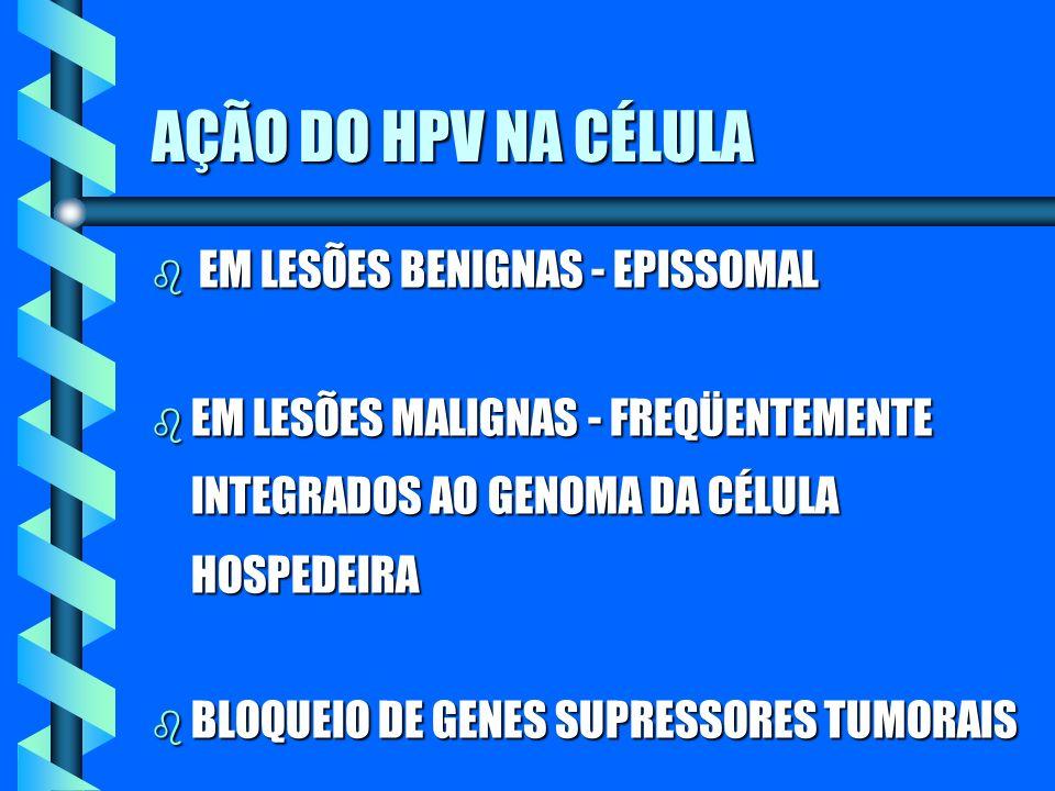 AÇÃO DO HPV NA CÉLULA EM LESÕES BENIGNAS - EPISSOMAL