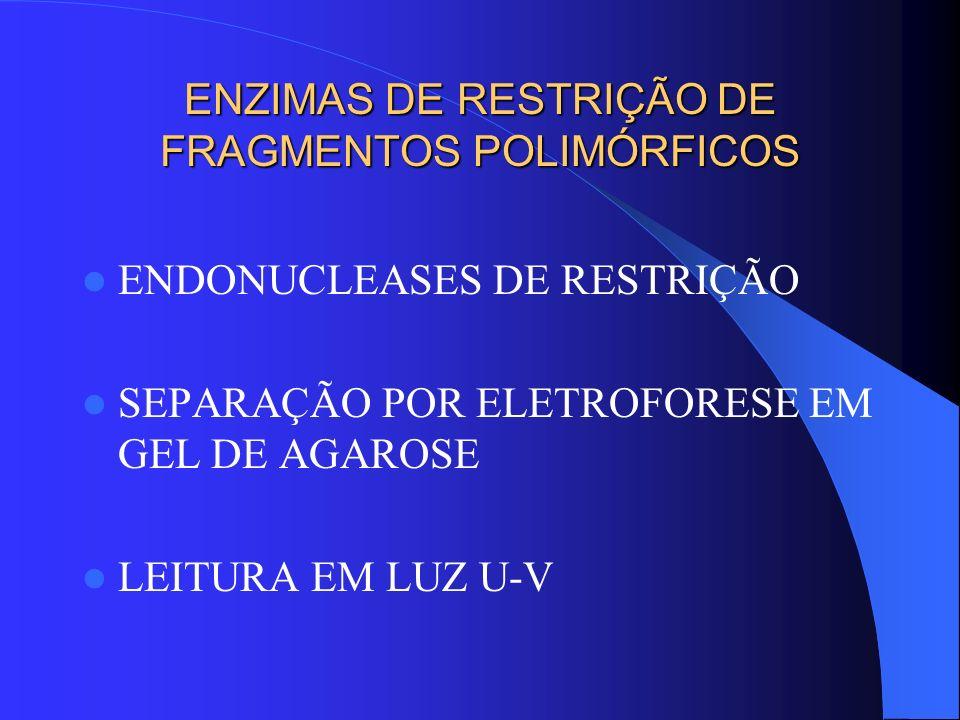 ENZIMAS DE RESTRIÇÃO DE FRAGMENTOS POLIMÓRFICOS