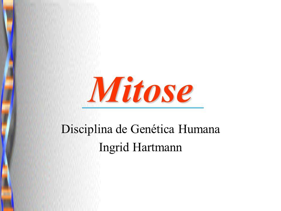 Disciplina de Genética Humana Ingrid Hartmann
