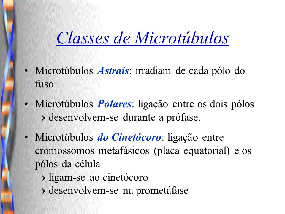 Classes de Microtúbulos