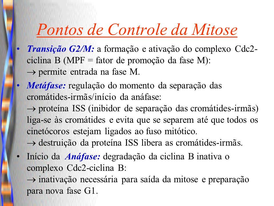 Pontos de Controle da Mitose