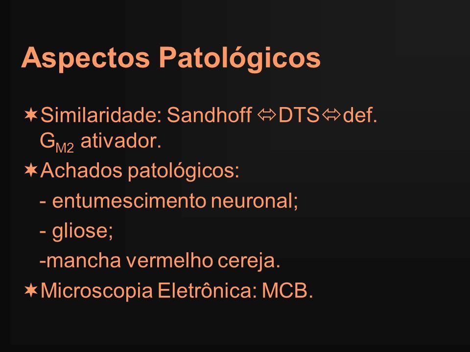 Aspectos Patológicos Similaridade: Sandhoff DTSdef. GM2 ativador.