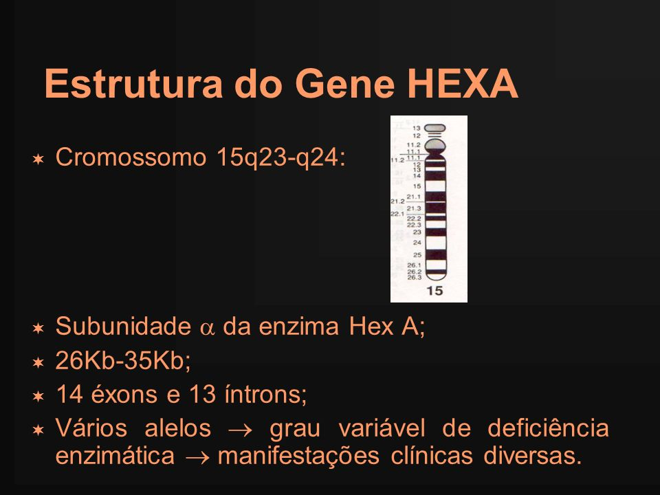 Estrutura do Gene HEXA Cromossomo 15q23-q24: