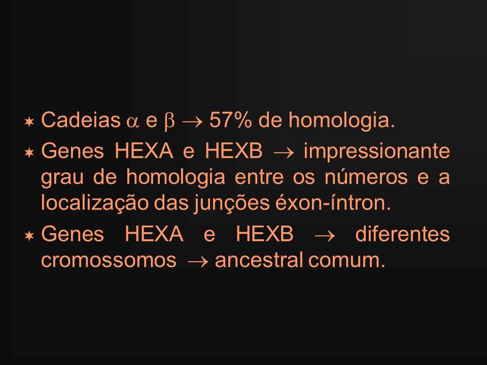 Cadeias  e   57% de homologia.