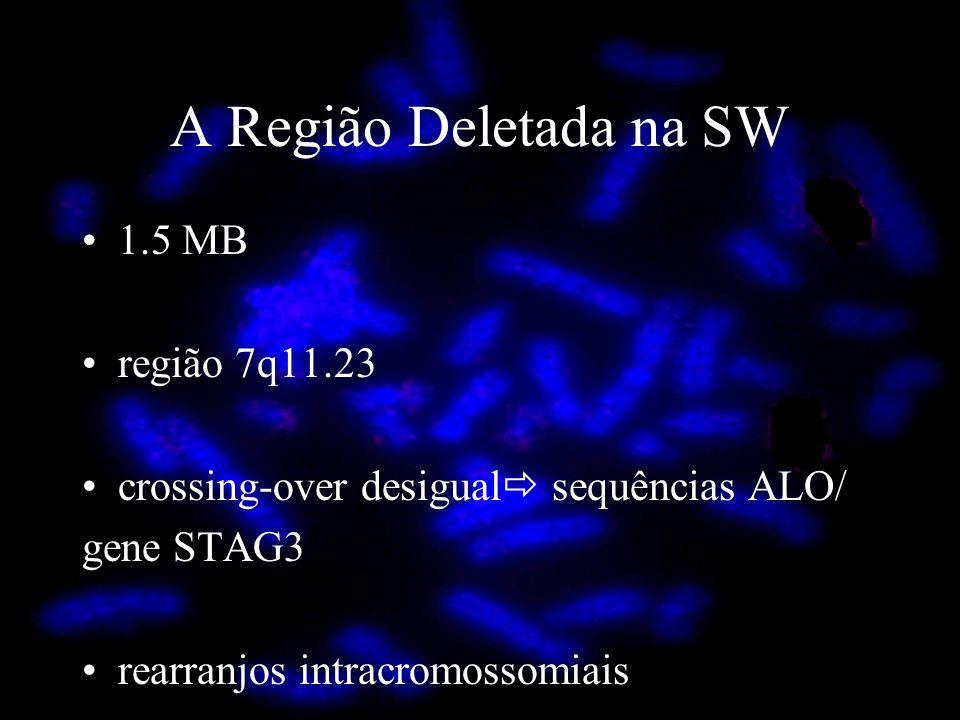 A Região Deletada na SW 1.5 MB região 7q11.23