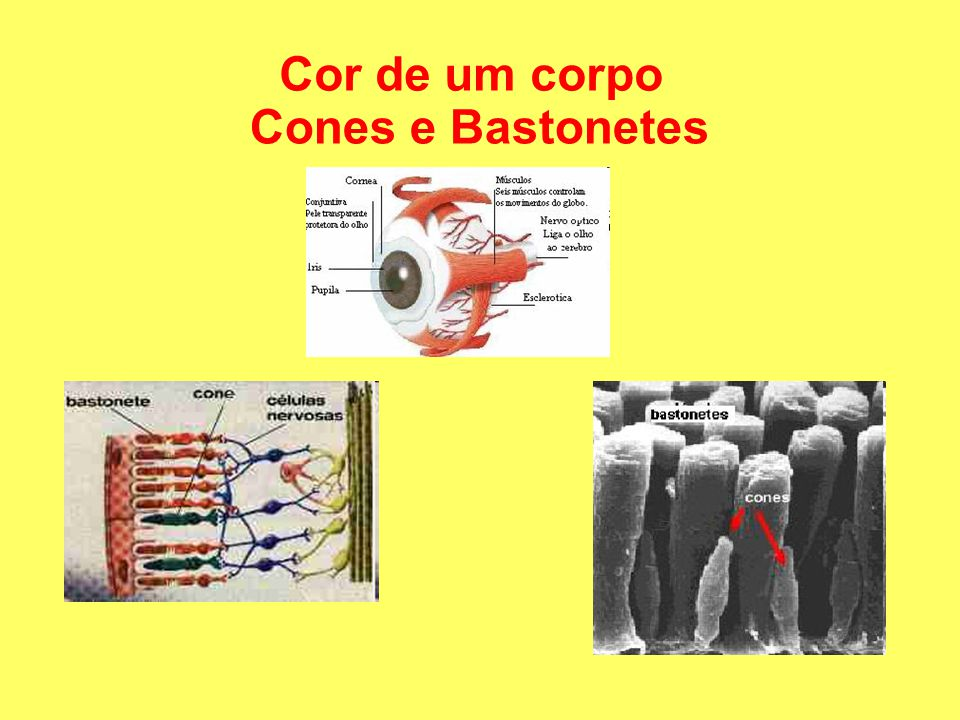 Cor de um corpo Cones e Bastonetes