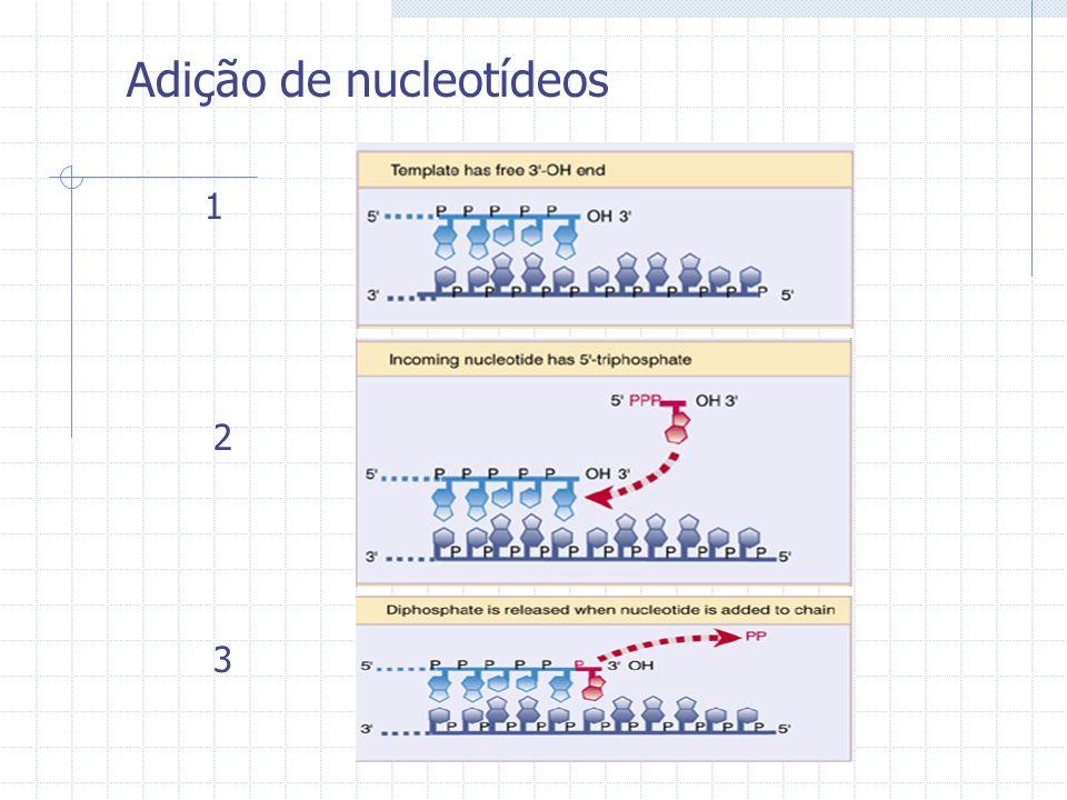Adição de nucleotídeos