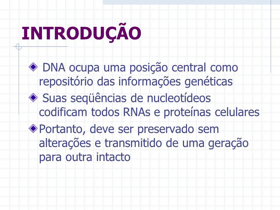 INTRODUÇÃO DNA ocupa uma posição central como repositório das informações genéticas.
