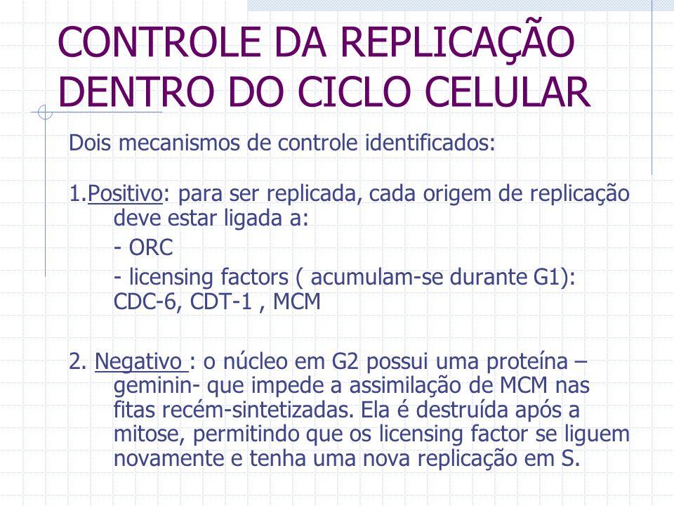 CONTROLE DA REPLICAÇÃO DENTRO DO CICLO CELULAR