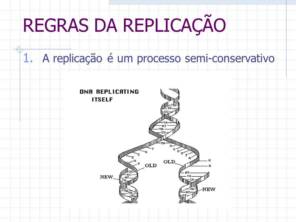 REGRAS DA REPLICAÇÃO A replicação é um processo semi-conservativo