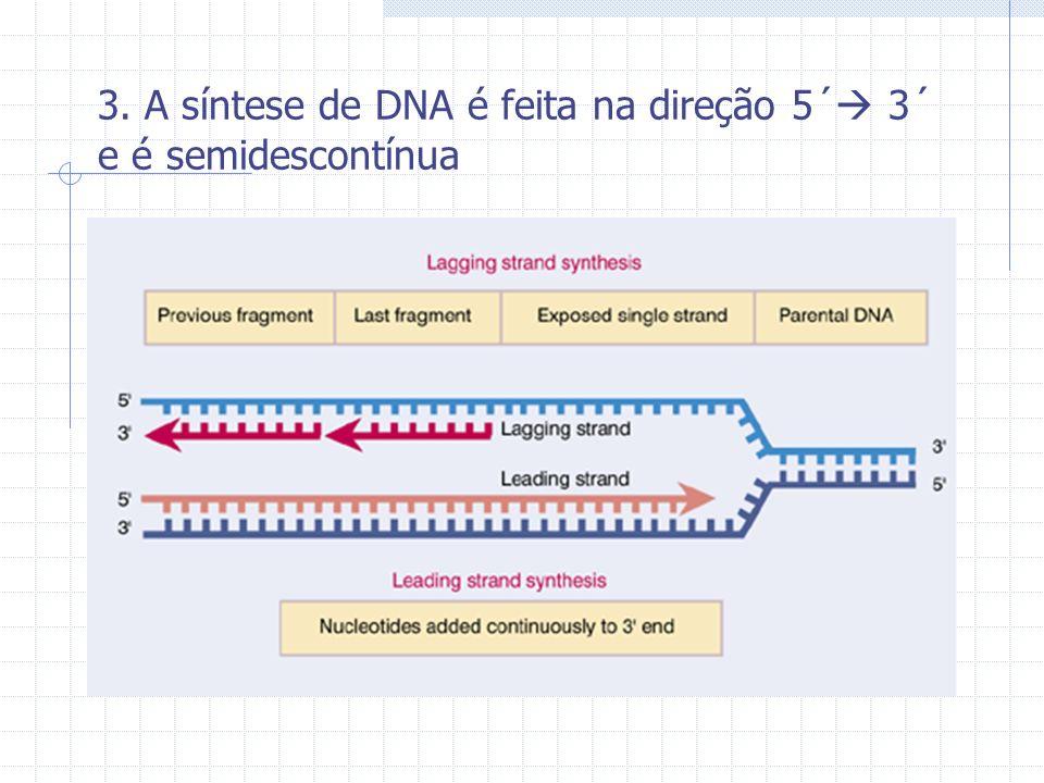 3. A síntese de DNA é feita na direção 5´ 3´ e é semidescontínua