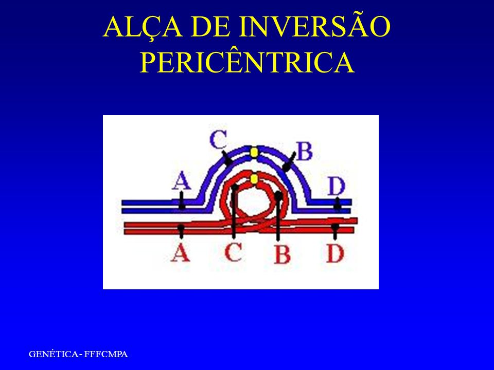 ALÇA DE INVERSÃO PERICÊNTRICA
