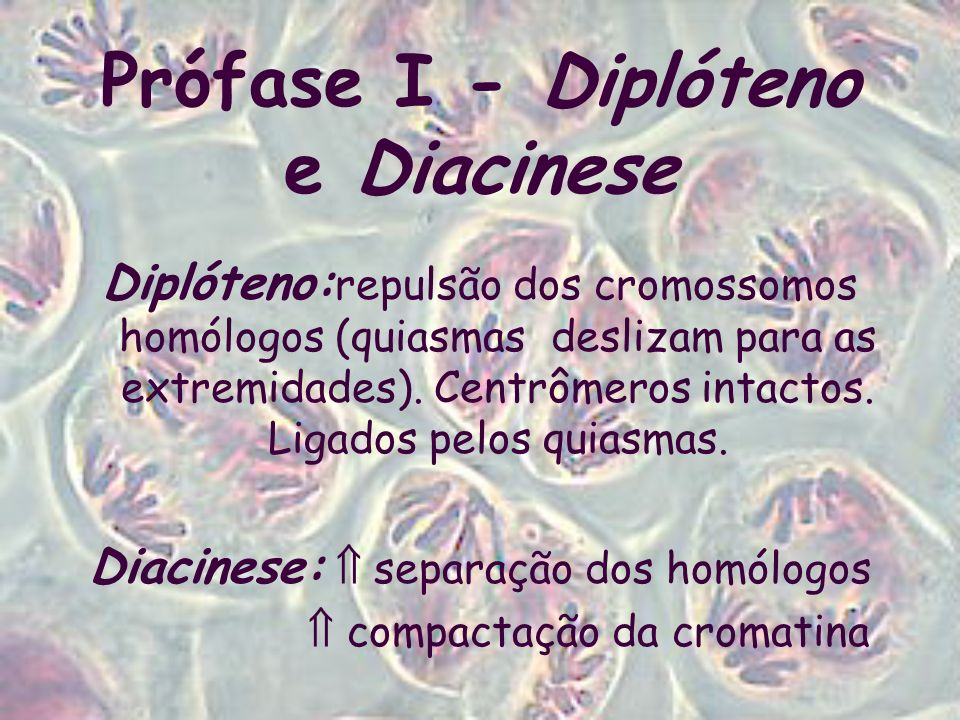 Prófase I - Diplóteno e Diacinese