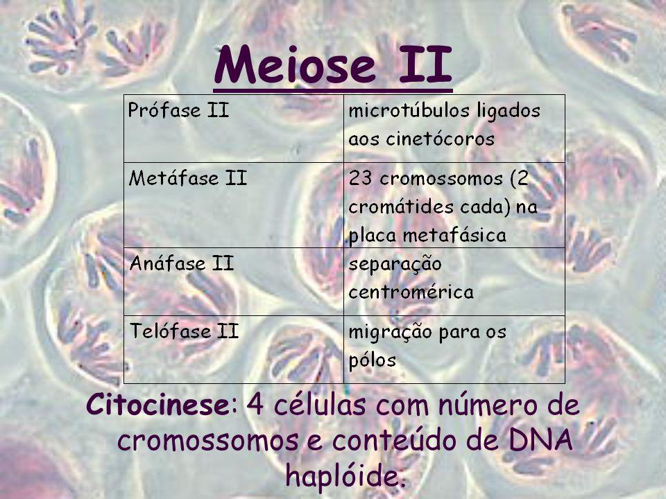 Meiose II Citocinese: 4 células com número de cromossomos e conteúdo de DNA haplóide.