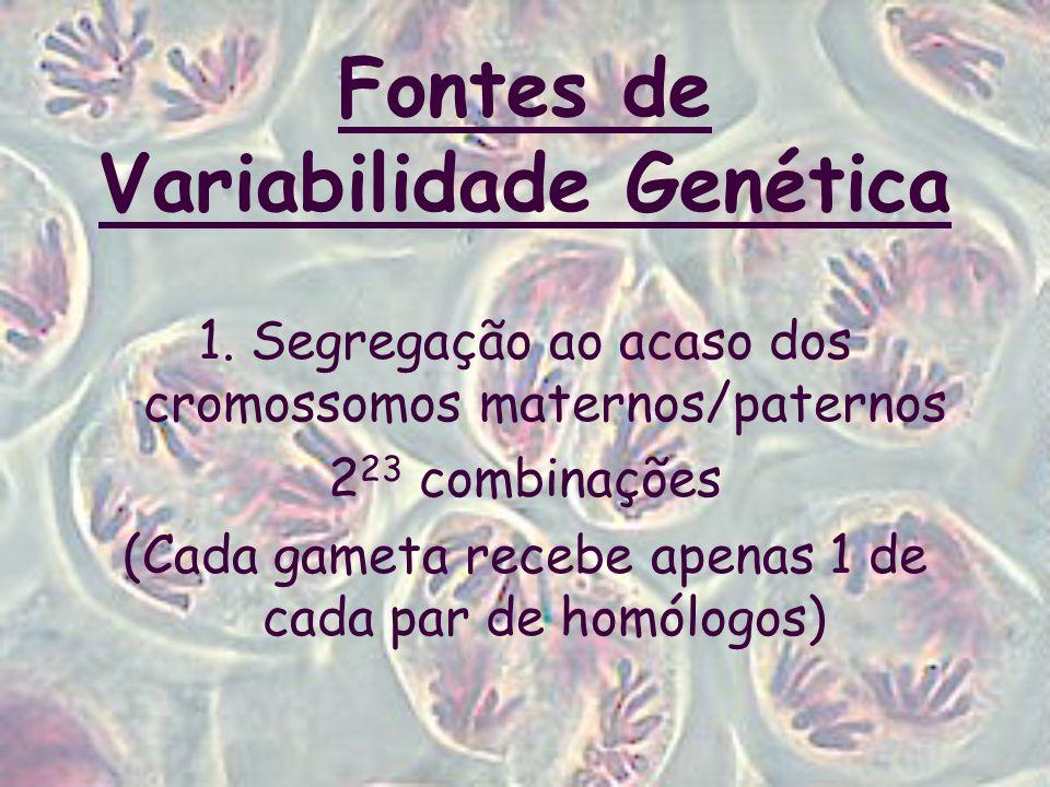 Fontes de Variabilidade Genética