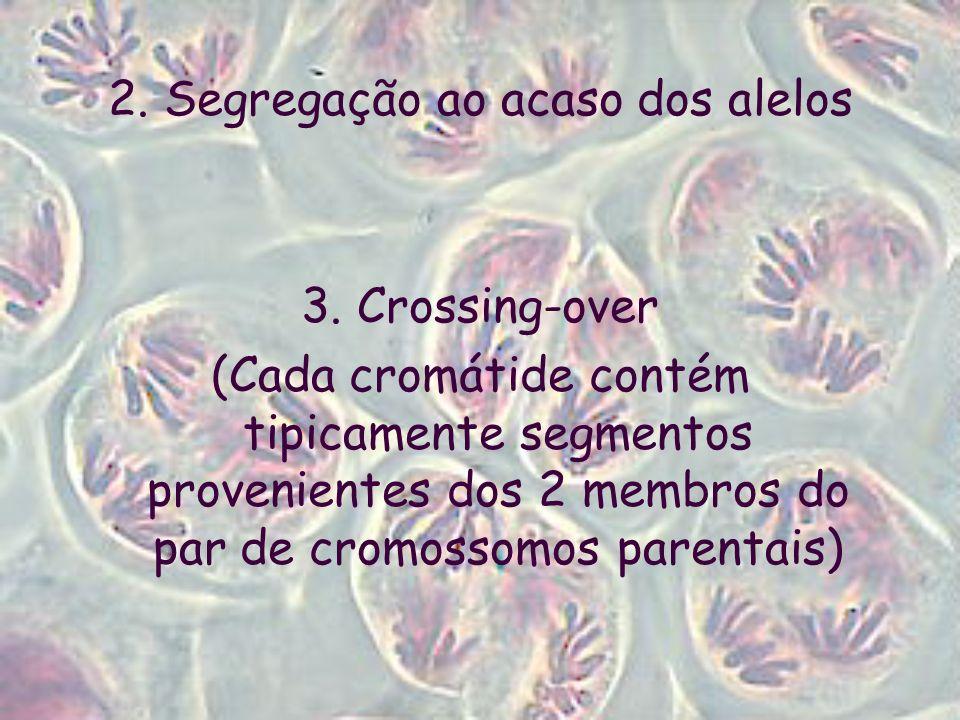 2. Segregação ao acaso dos alelos