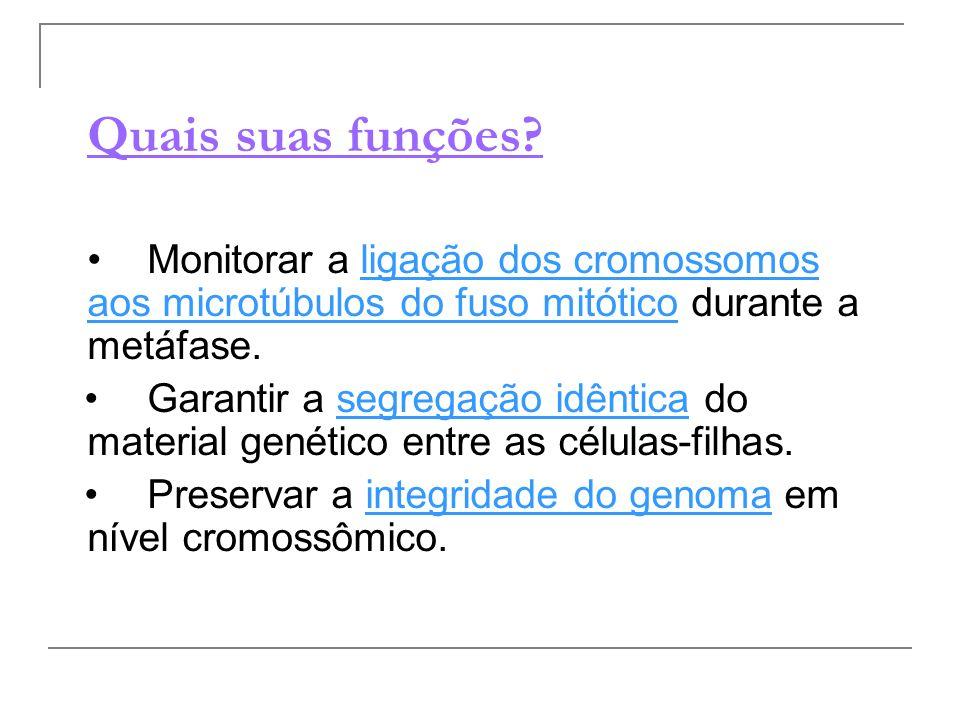 Quais suas funções • Monitorar a ligação dos cromossomos aos microtúbulos do fuso mitótico durante a metáfase.