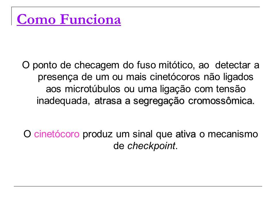 O cinetócoro produz um sinal que ativa o mecanismo de checkpoint.