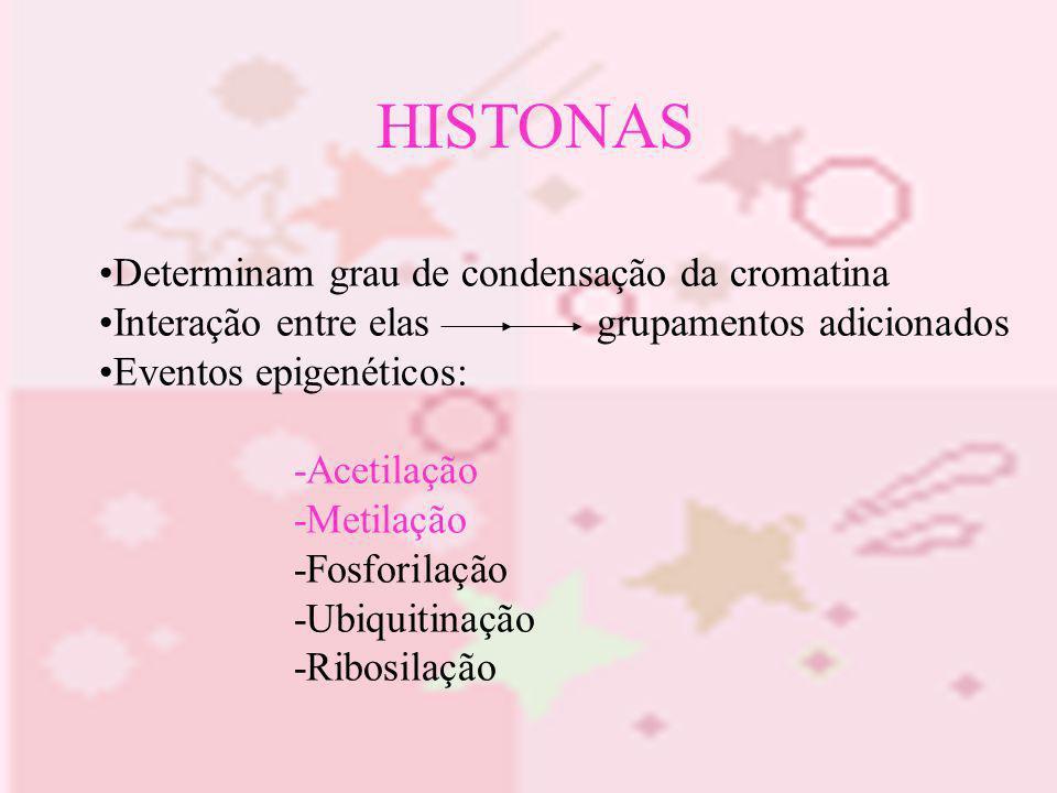 HISTONAS Determinam grau de condensação da cromatina