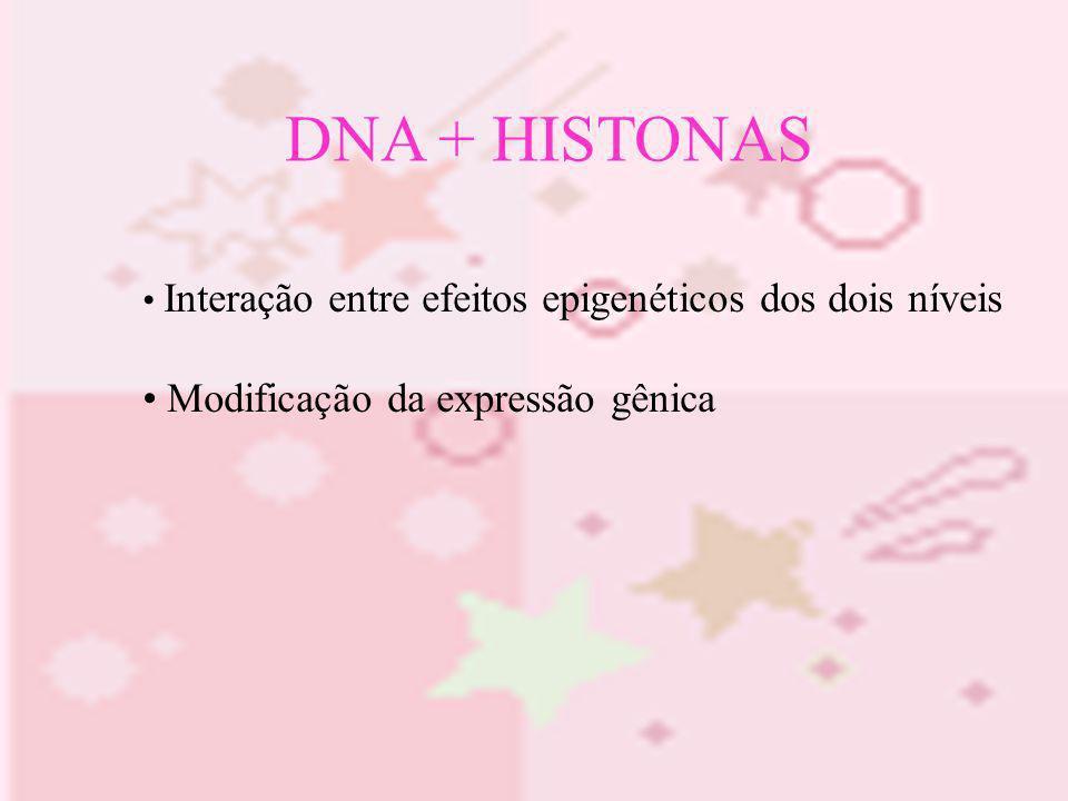 DNA + HISTONAS Modificação da expressão gênica