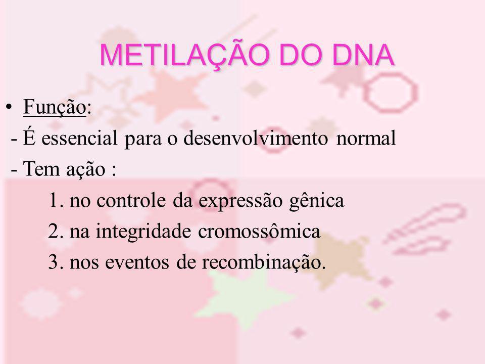 METILAÇÃO DO DNA Função: - É essencial para o desenvolvimento normal