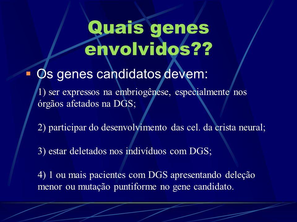 Quais genes envolvidos