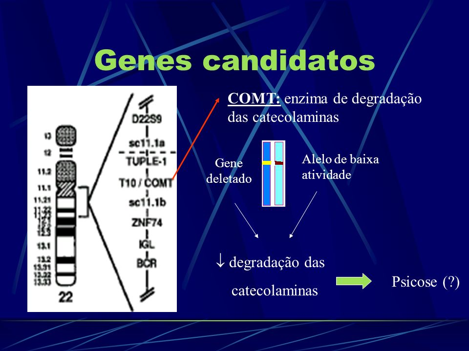 Genes candidatos COMT: enzima de degradação das catecolaminas