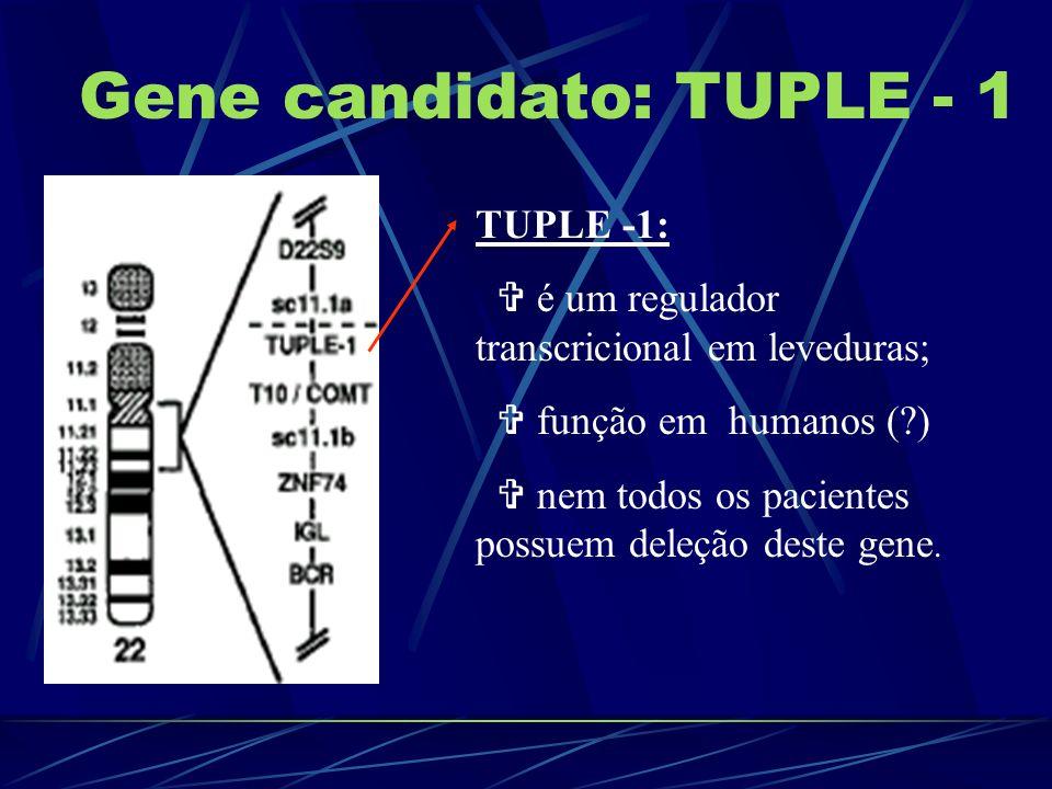 Gene candidato: TUPLE - 1
