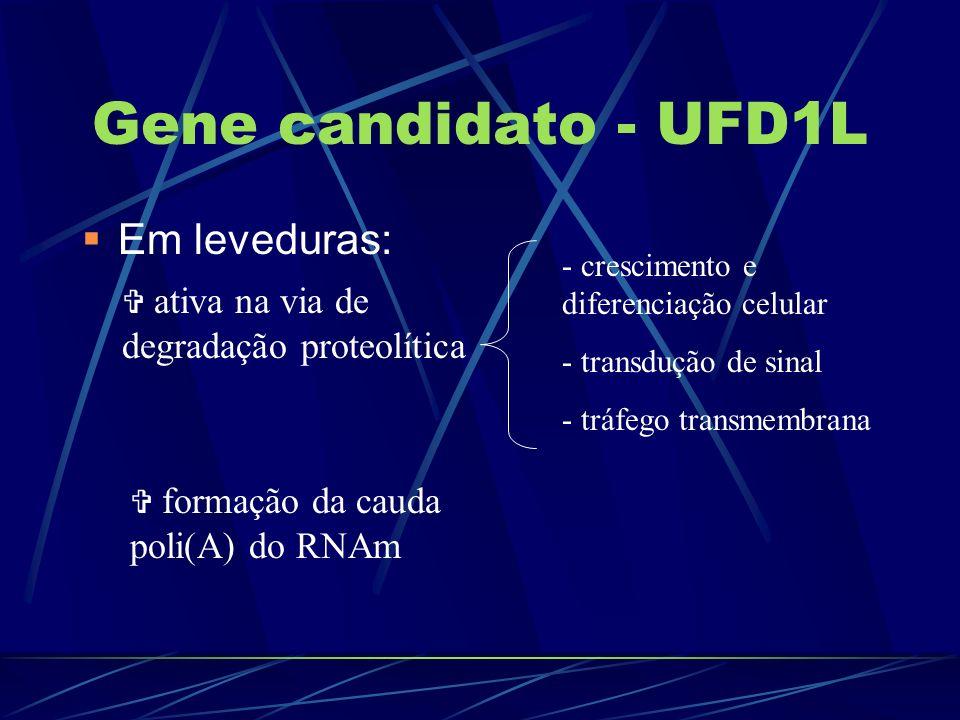 Gene candidato - UFD1L Em leveduras: