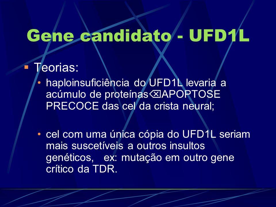 Gene candidato - UFD1L Teorias: