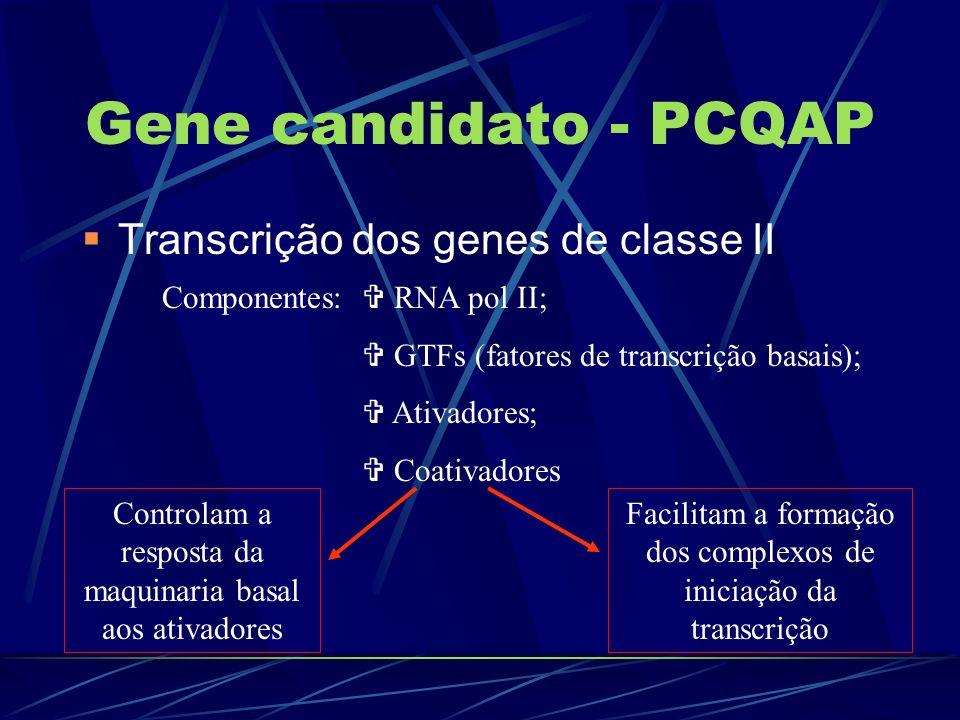 Gene candidato - PCQAP Transcrição dos genes de classe II