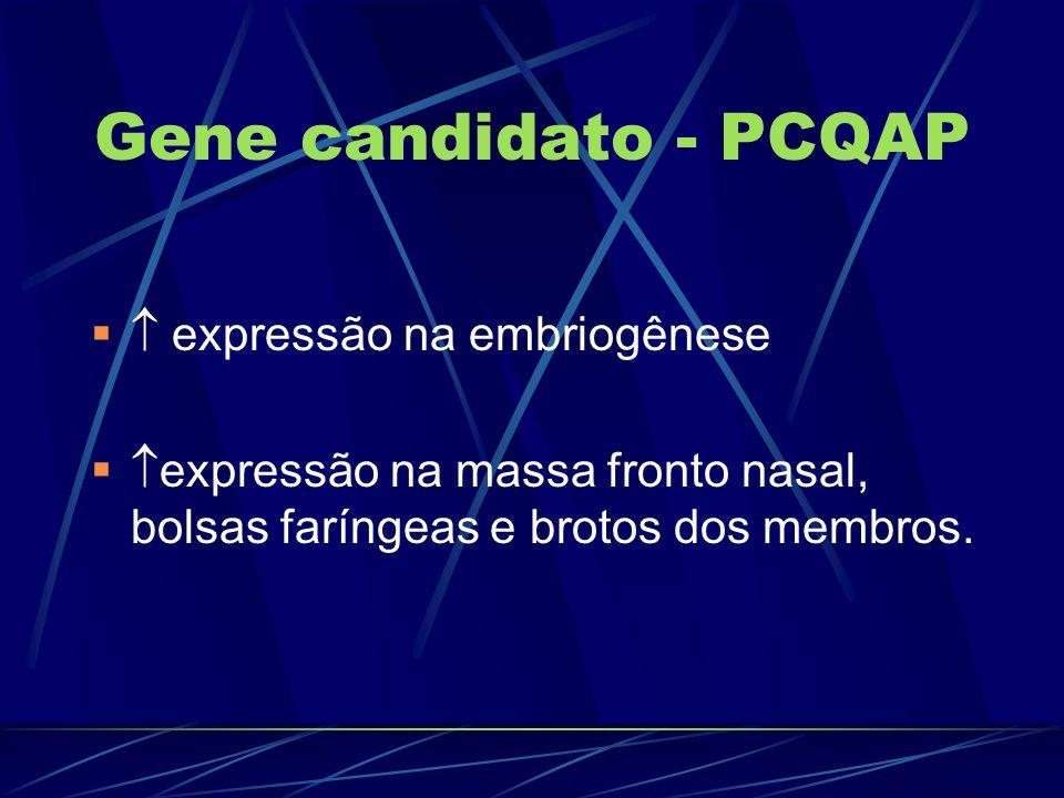 Gene candidato - PCQAP  expressão na embriogênese
