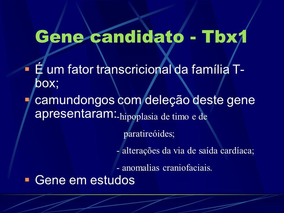 Gene candidato - Tbx1 É um fator transcricional da família T-box;