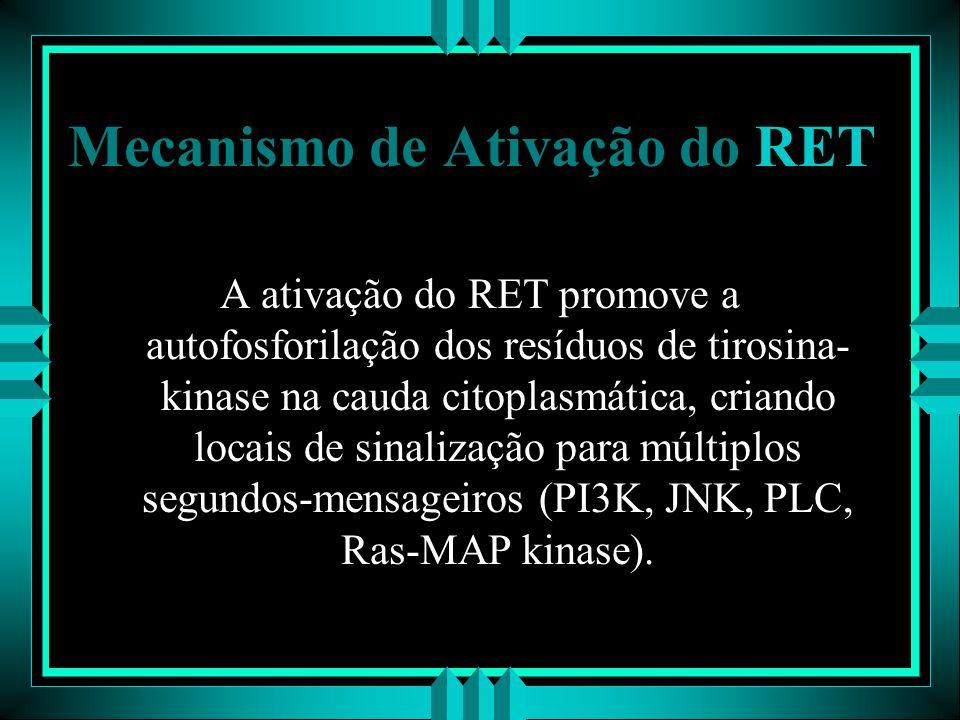 Mecanismo de Ativação do RET