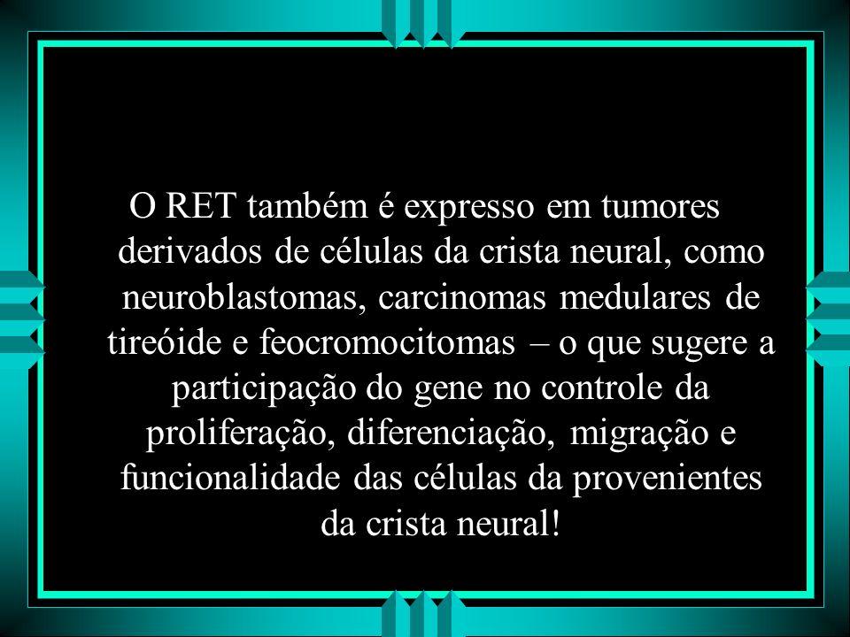 O RET também é expresso em tumores derivados de células da crista neural, como neuroblastomas, carcinomas medulares de tireóide e feocromocitomas – o que sugere a participação do gene no controle da proliferação, diferenciação, migração e funcionalidade das células da provenientes da crista neural!