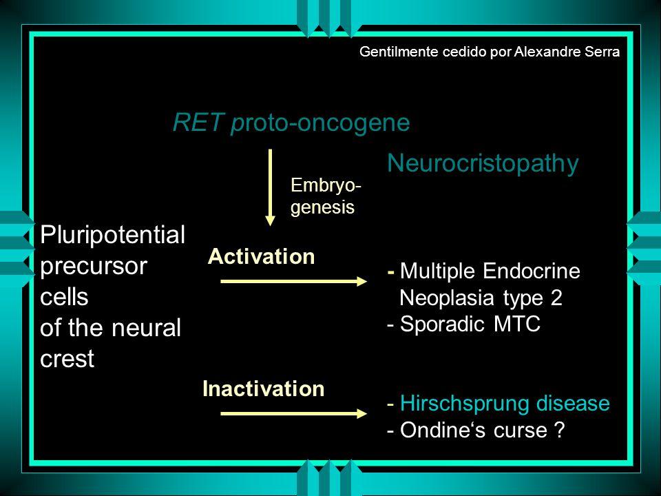 RET proto-oncogene Neurocristopathy Pluripotential precursor cells