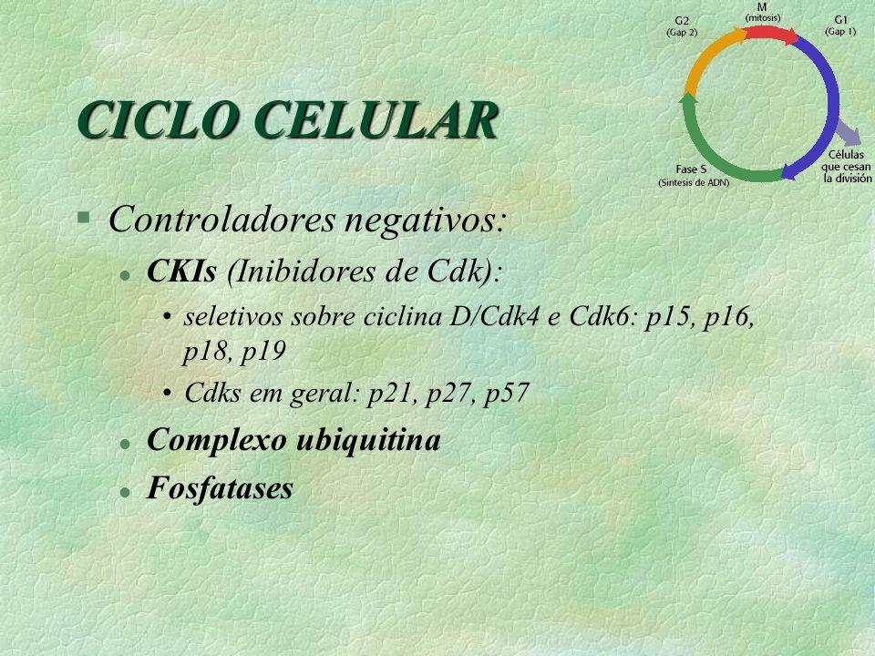 CICLO CELULAR Controladores negativos: CKIs (Inibidores de Cdk):