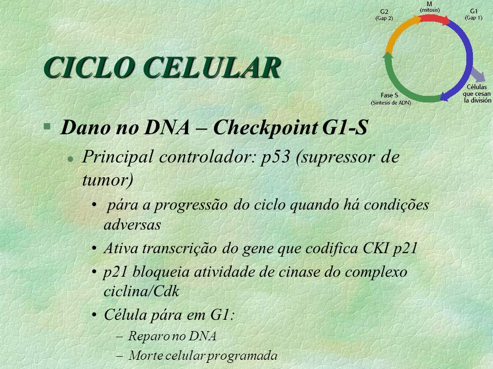 CICLO CELULAR Dano no DNA – Checkpoint G1-S