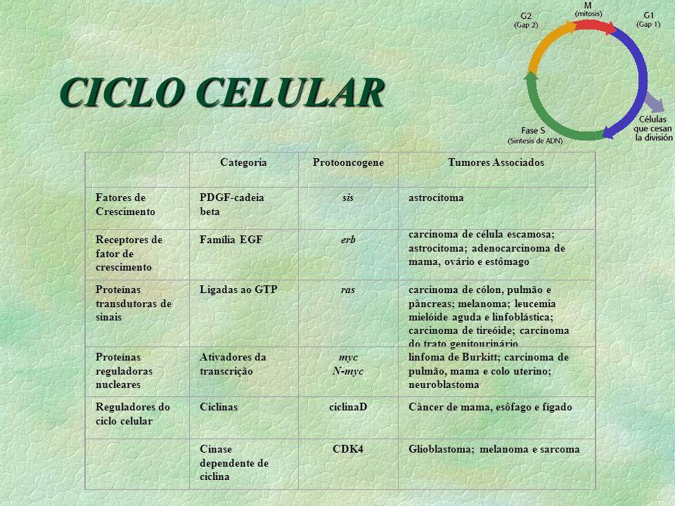 CICLO CELULAR Categoria Protooncogene Tumores Associados
