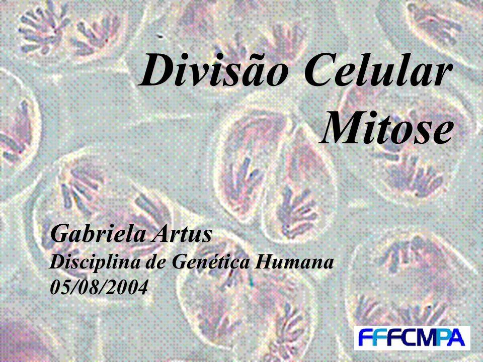 Divisão Celular Mitose Gabriela Artus Disciplina de Genética Humana