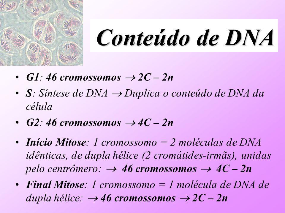 Conteúdo de DNA G1: 46 cromossomos  2C – 2n