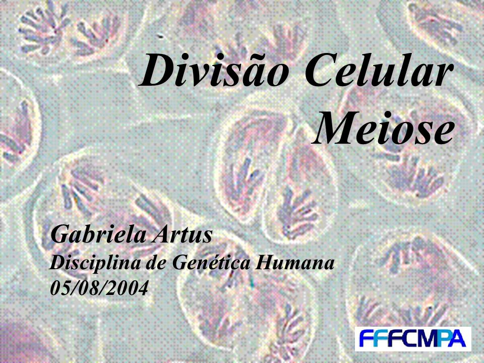 Divisão Celular Meiose Gabriela Artus Disciplina de Genética Humana