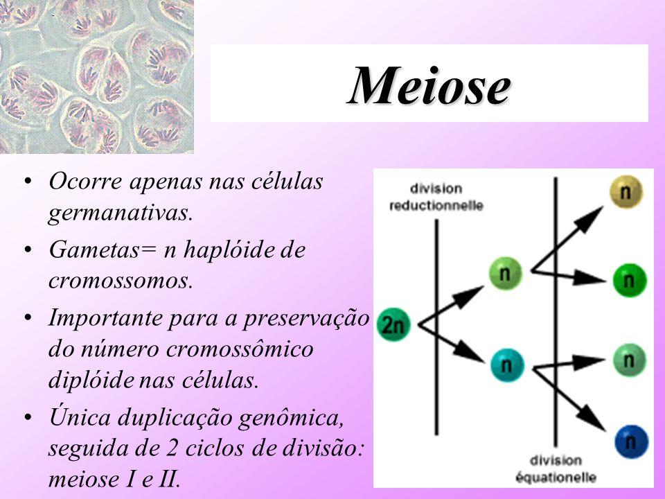 Meiose Ocorre apenas nas células germanativas.