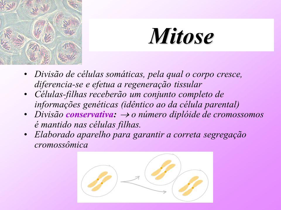 MitoseDivisão de células somáticas, pela qual o corpo cresce, diferencia-se e efetua a regeneração tissular.
