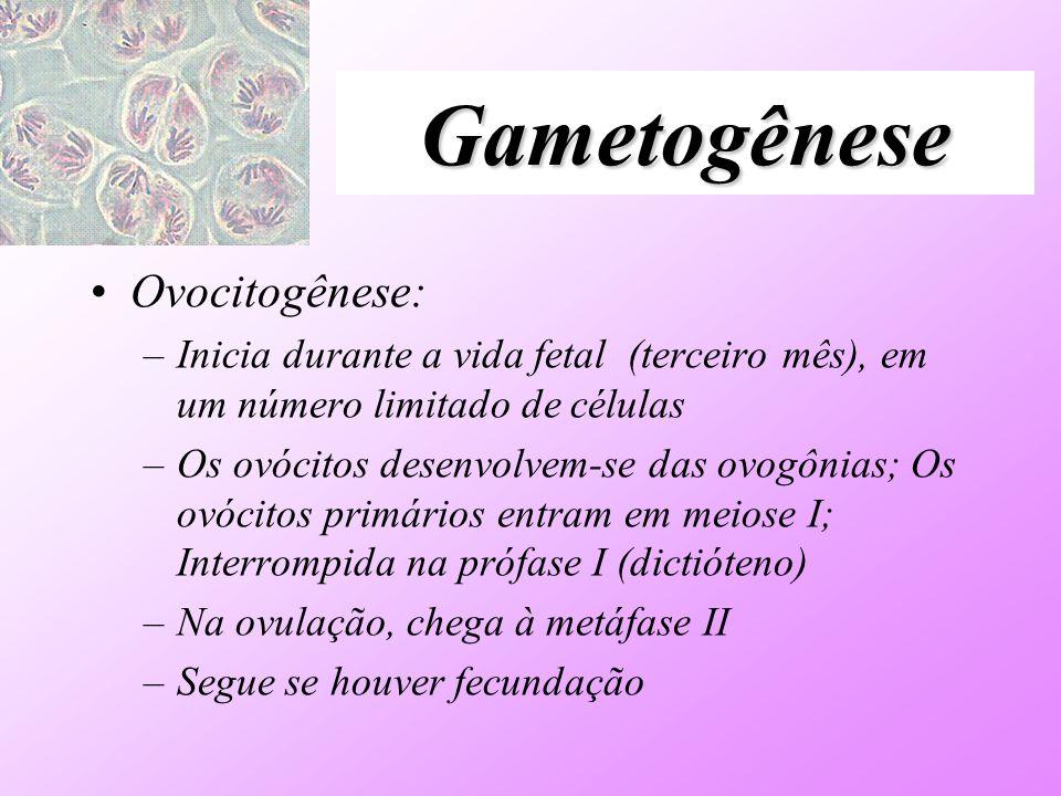 Gametogênese Ovocitogênese: