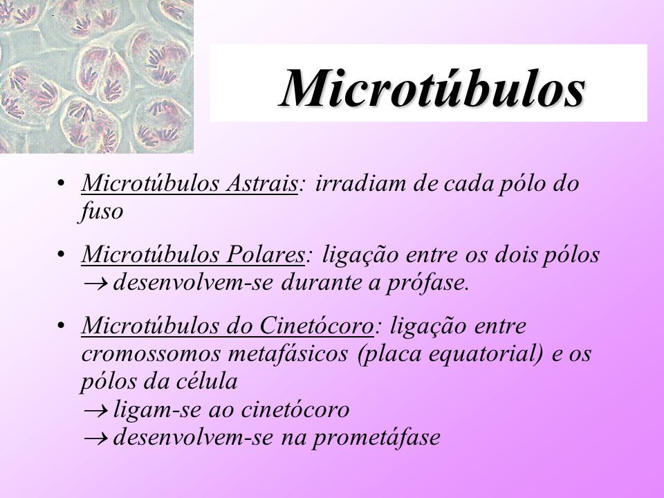 Microtúbulos Microtúbulos Astrais: irradiam de cada pólo do fuso