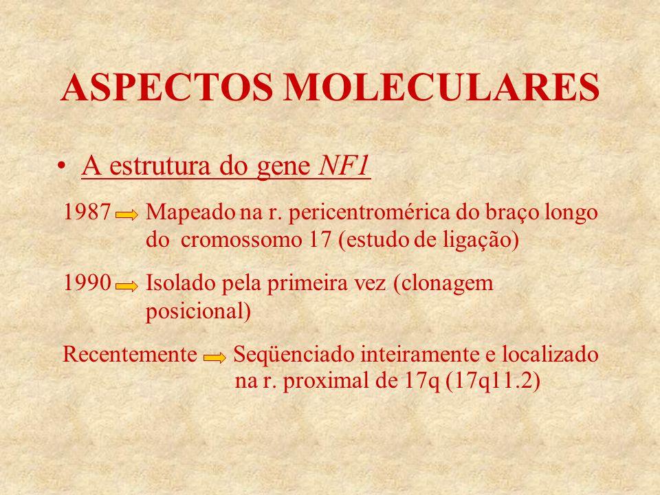 ASPECTOS MOLECULARES A estrutura do gene NF1